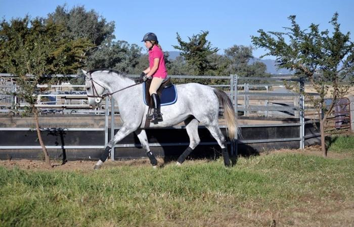 REDUCED TO SELL !! -  A GREAT PROJECT HORSE