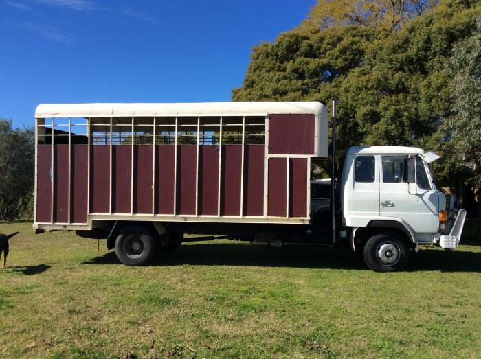 1987 Hino Horse Truck - 6 horse truck