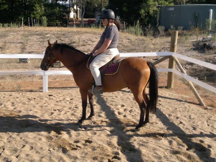 Perfect home sought for exceptional gelding.