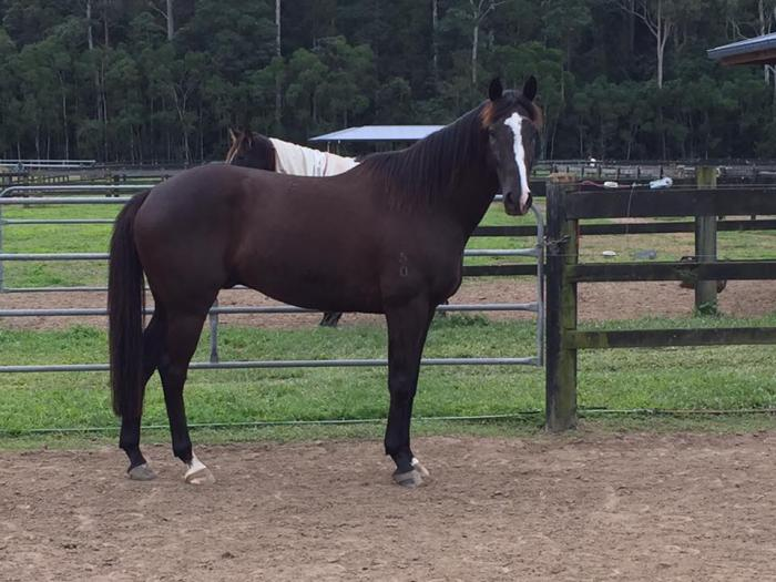 Stunning Off the Track Gelding