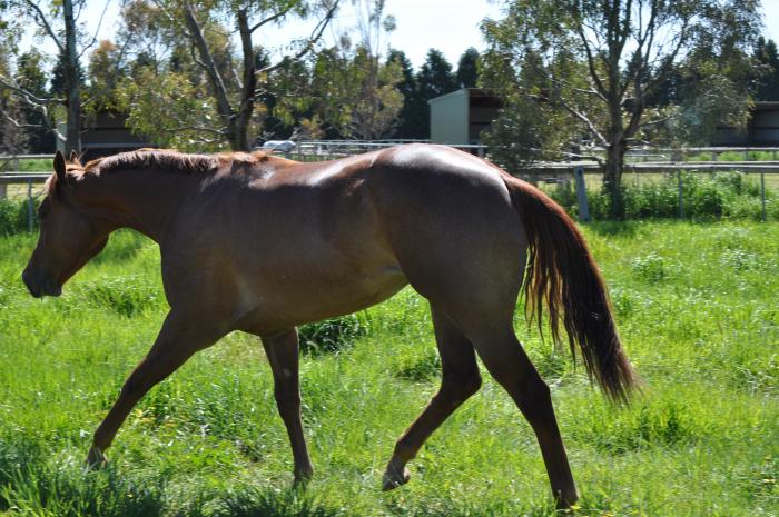 Exceptional 2yo Filly - Price Reduced Again
