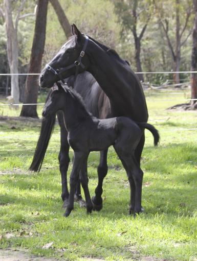 OOSeven filly 1