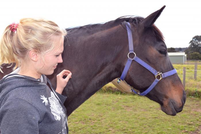FoalSafe foaling alarm