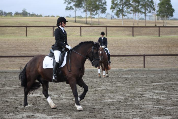 Dressage Pony