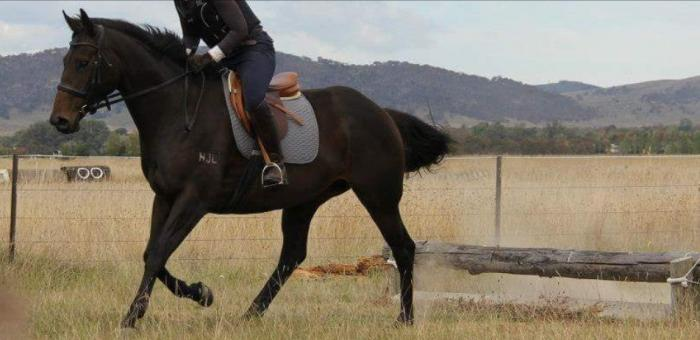 Perfect ARC/PC Riding Horse