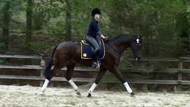 Pretty Warmblood, Exceptional Paces with Temp!