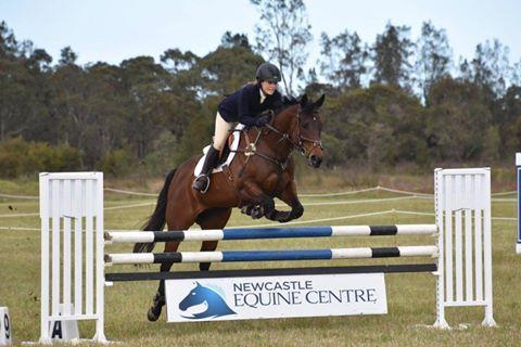 Gorgeous Show Jumping Mare