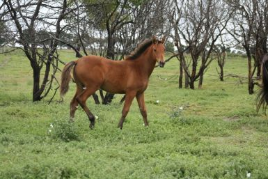 Grace's Filly March 2011