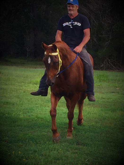 QUIET  Q/HORSE GELDING