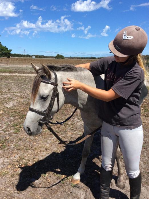 13hh, 5yo green broken riding pony type
