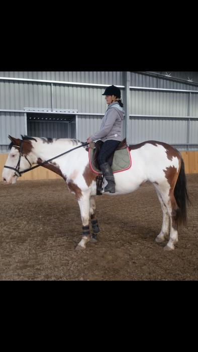 level 3 dressage coloured horse