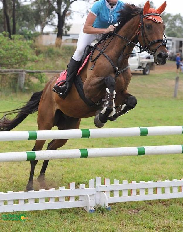 Experienced Showjumper