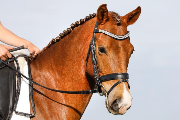 """BOBBY D"" - GERMAN DRESSAGE PONY"