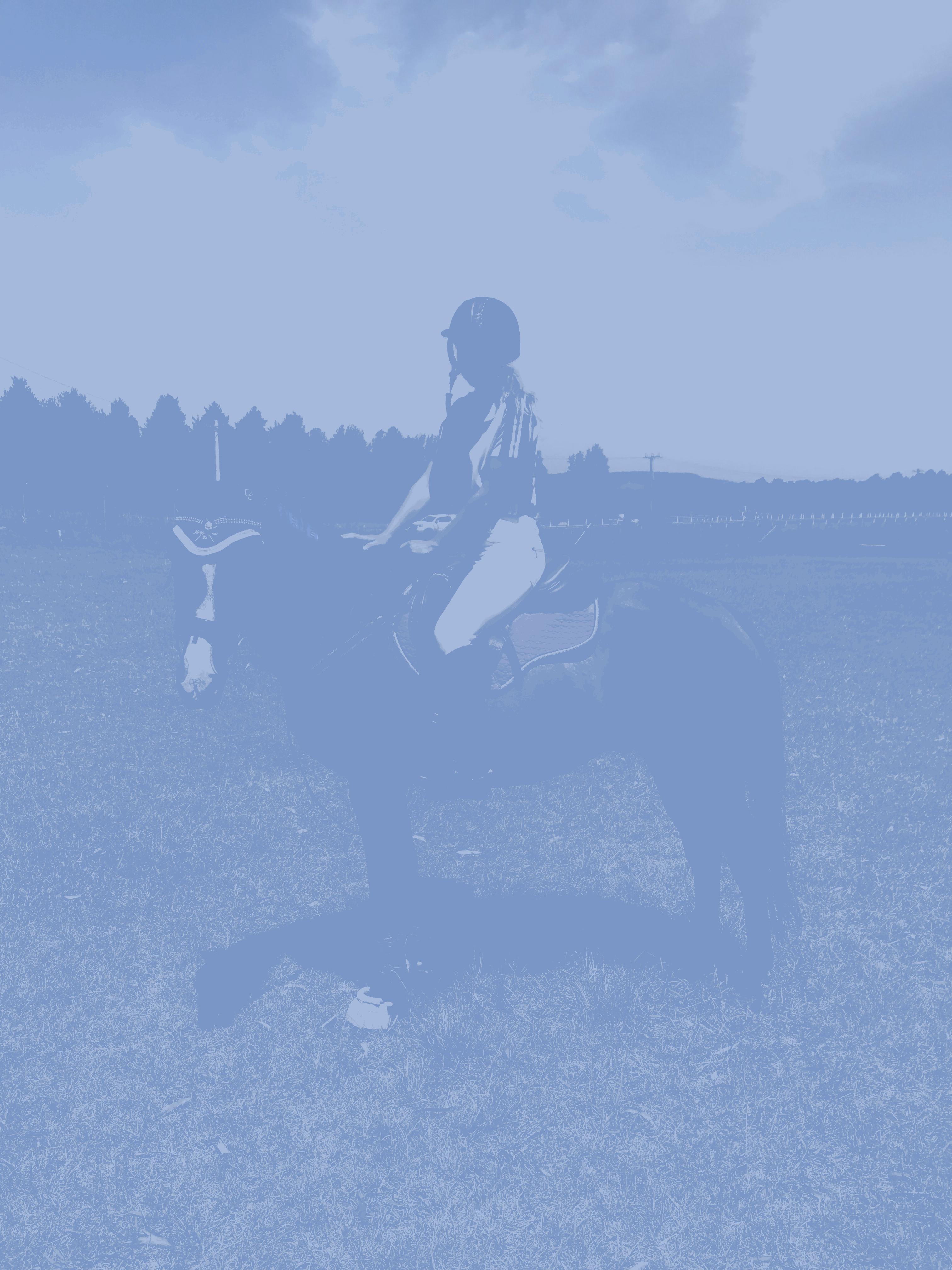 Dallas beautiful stock horse gelding