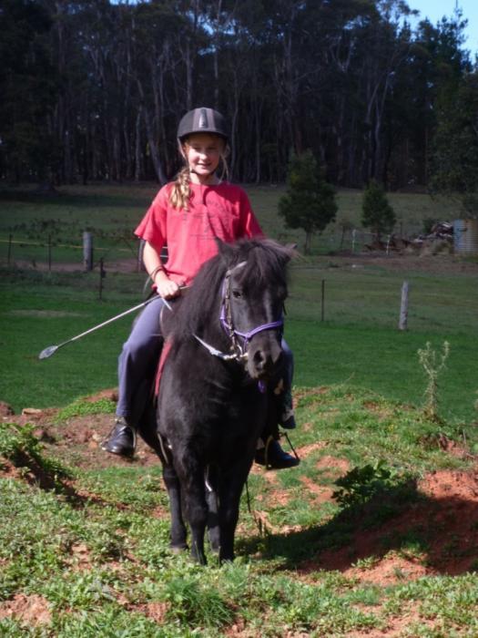 Beautiful Black Bella, shetland pony