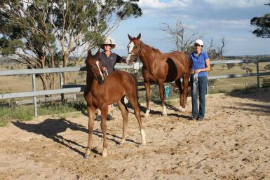After being assessed premium. 0.5% off the highest score colt under 12 months in NSW