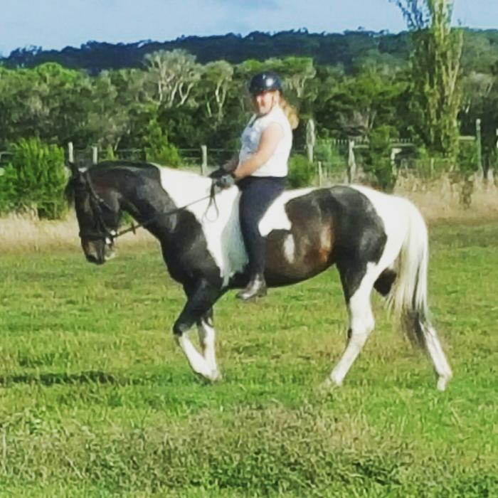 Beautiful Paint x Quarter horse Mare