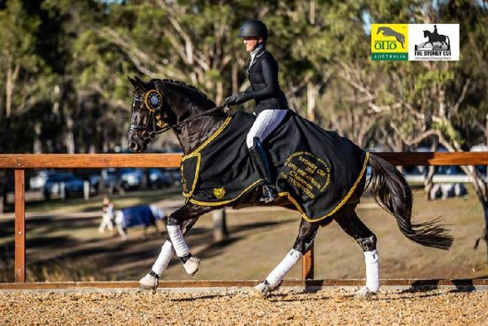 Bluefields Dankeshoen - ACE Group Stallion Service