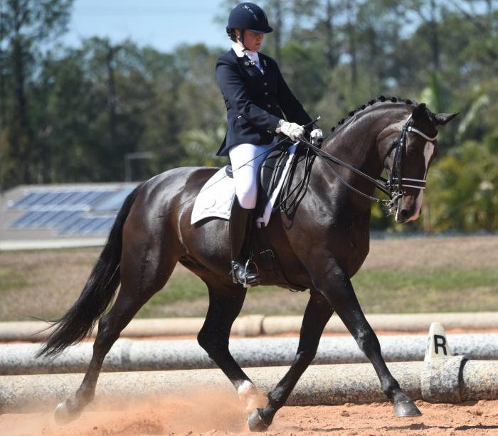 STUNNING AND SUCCESSFUL FEI HORSE