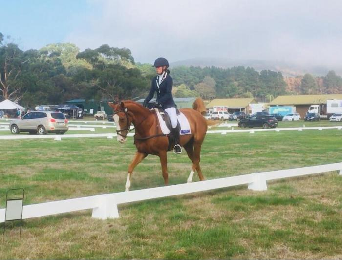 Talented and quiet eventer/show jumper