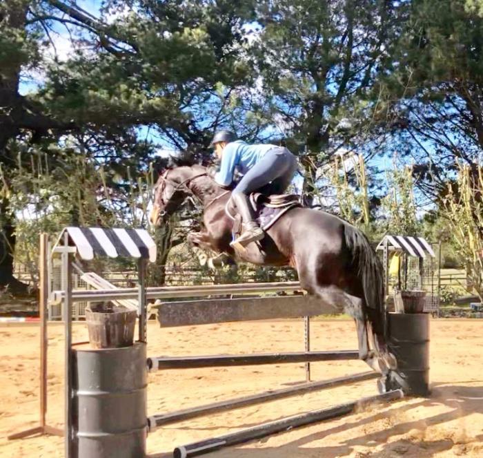 Honest Jumper REDUCED FOR QUICK SALE