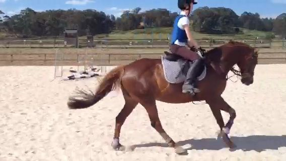 Talented Pony - URGENT SALE