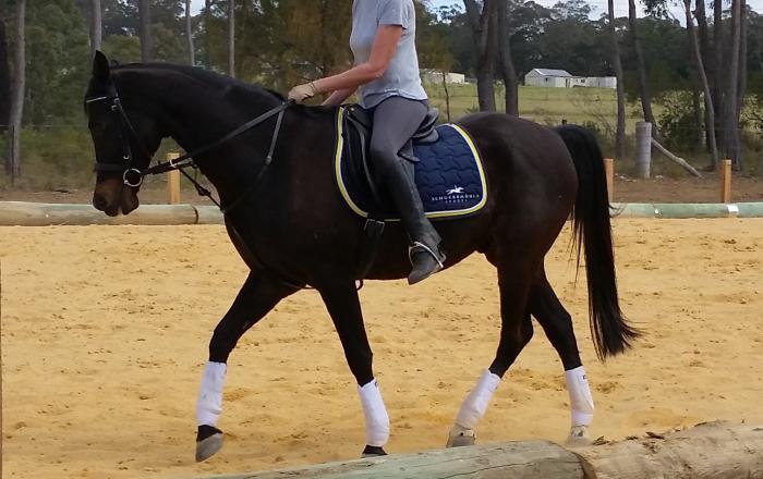 Lovely Riding Pony Gelding