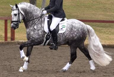 "Hanna Poderoso (rider is 6'4"" tall)"