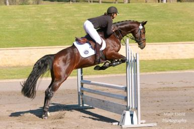 Wimborne Constellation - Head Stud Book mare scoring over 80% at her mare classification