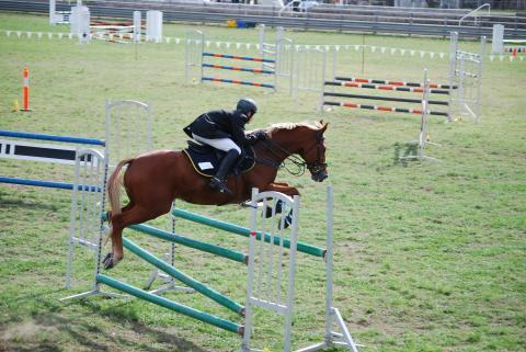 Interschool, ARC, PC - Showjumper/CT/Showman