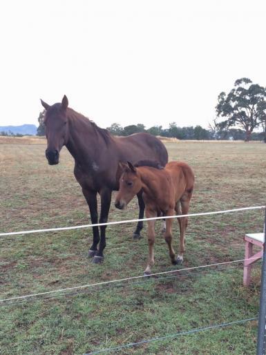 Bella & Foal 2015