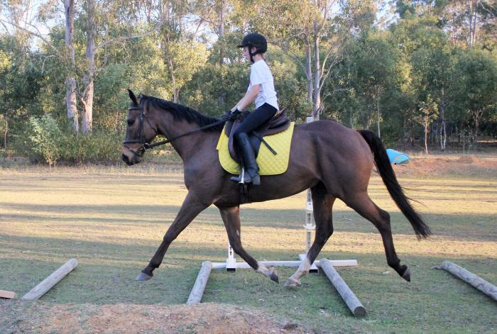 15hh Bay TB looking to be loved