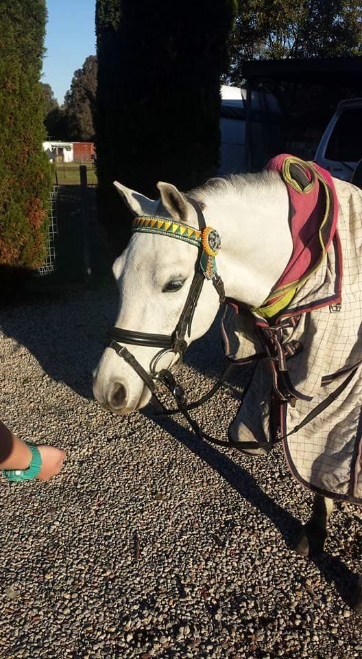 Leading rein show pony