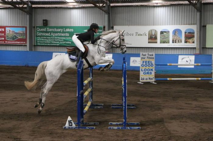 Talented show jumper