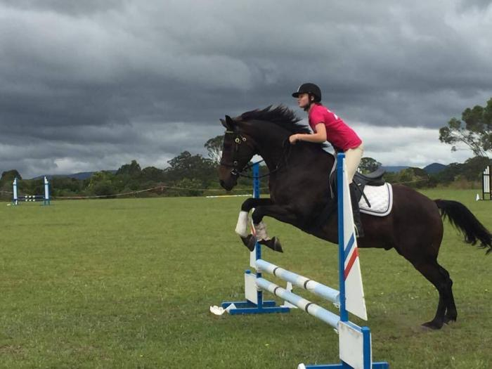 Stock Horse x Gelding - price reduced