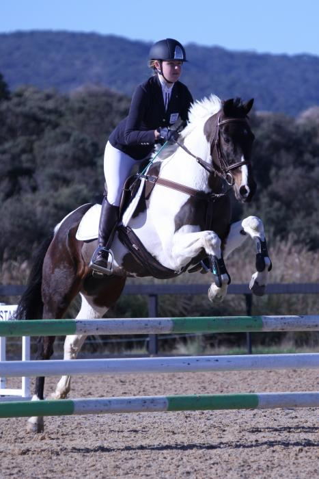 Competitive Schoolmaster Showjumper
