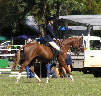 3yo Reserve Champion at first ever outing Coonabarabran Show March 2013