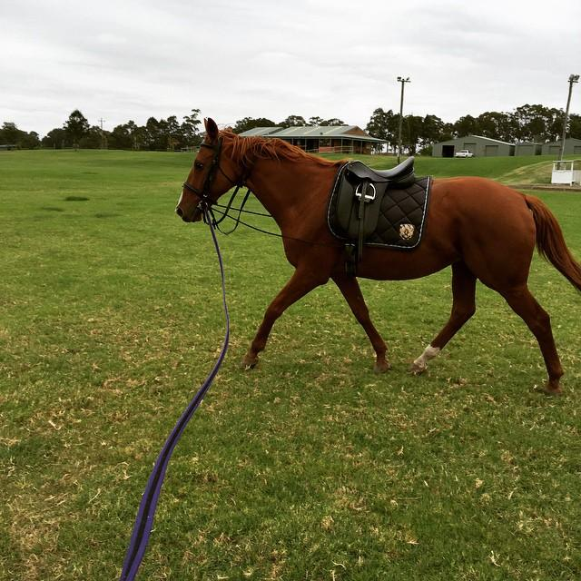 Chestnut Thoroughbred mare