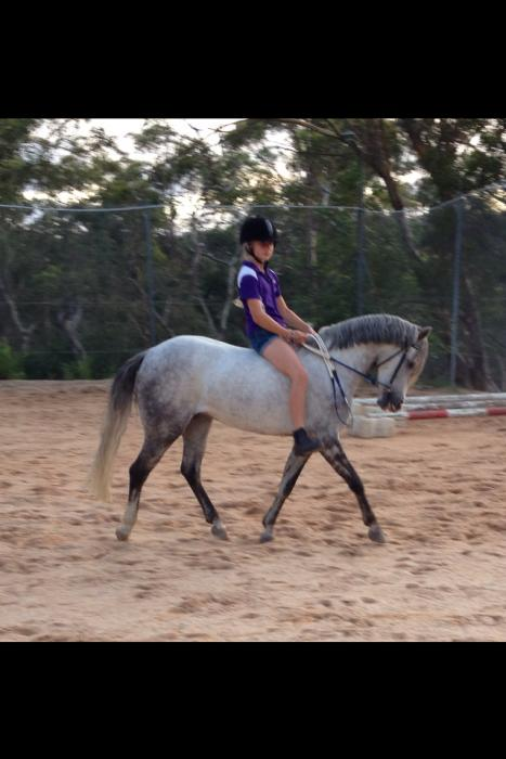 Beginners Australian Pony - Gelding 12.2hh
