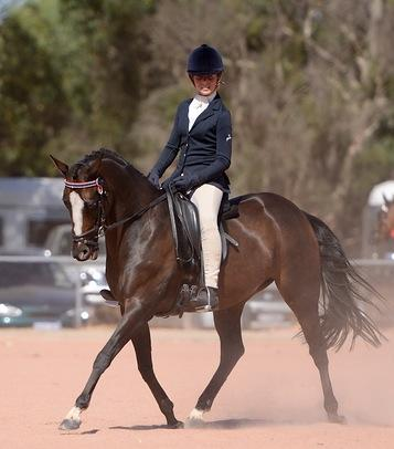 Talented 14.2 Riding Pony