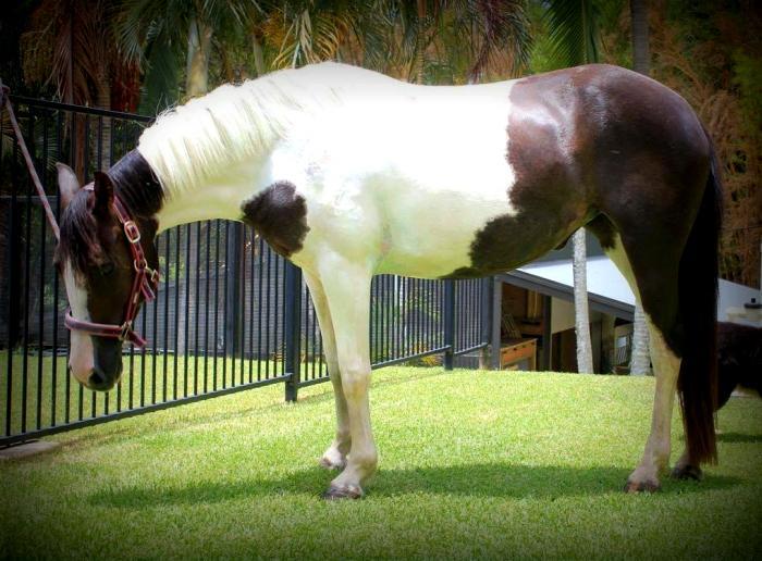Stunning Project Pony