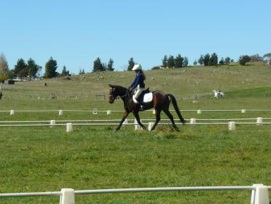 Dressage at SMIEC