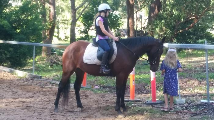 """Ruby"" Fun sized 14.3hh Standardbred riding horse"