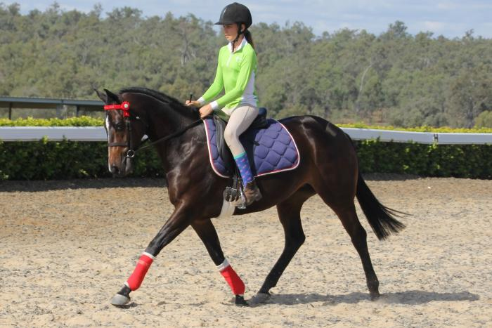 Galloway/Pony Dressage