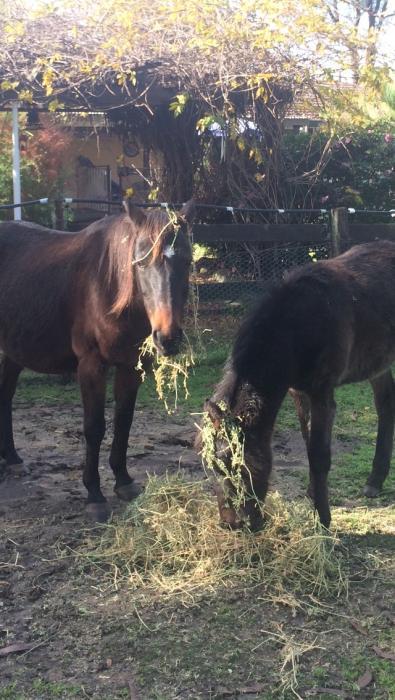 Stock Horse Colt under 1