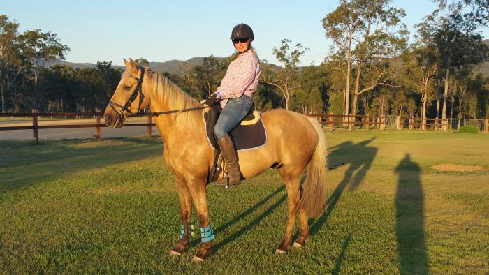 Beautiful Golden QH or QH x Gelding
