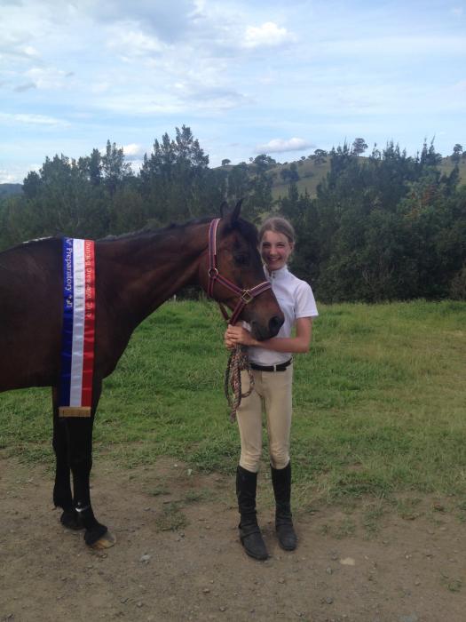 Gentle, sweet gelding - beginner or nervous rider
