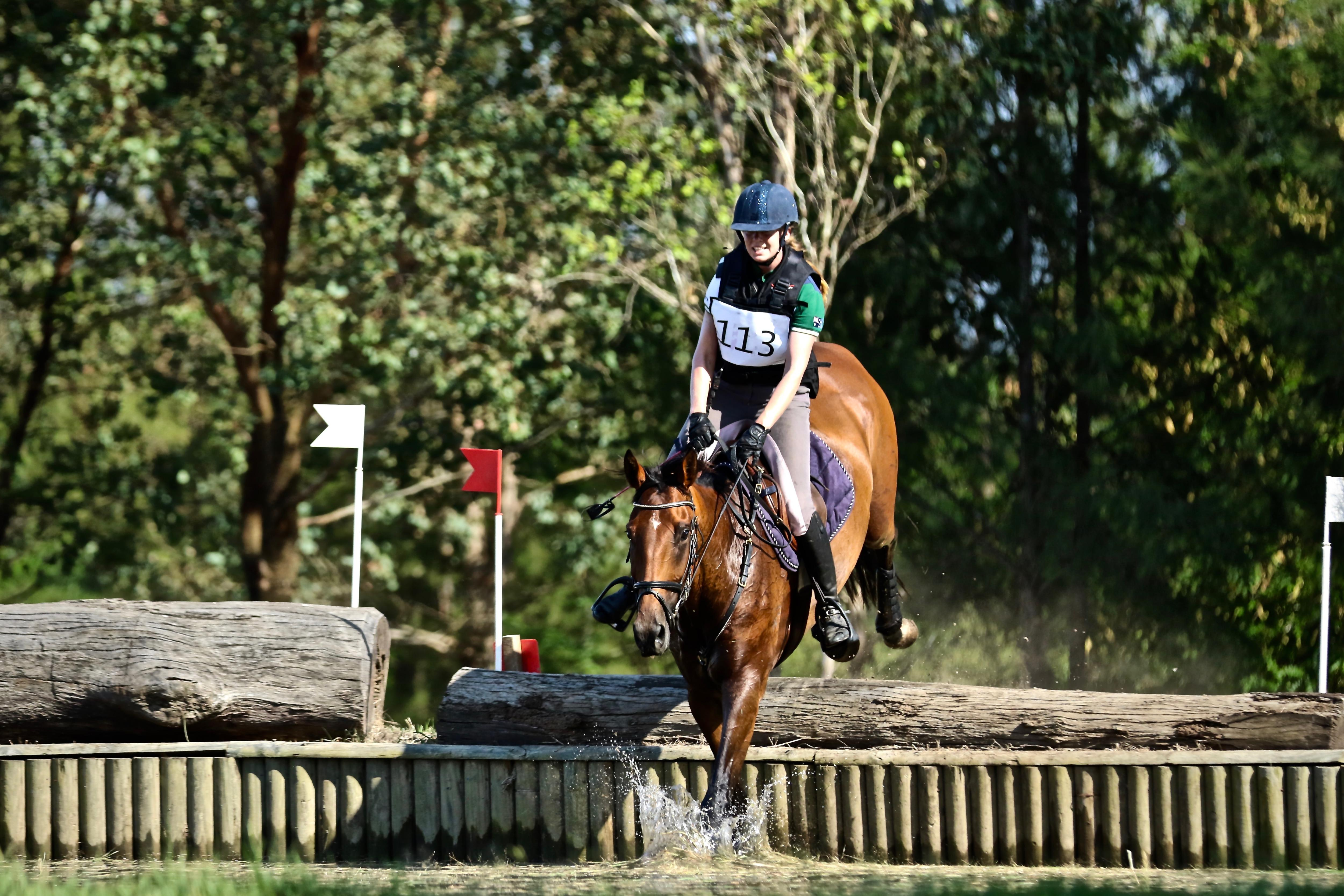 Talented and Straight Forward Eventer or Dressage Horse