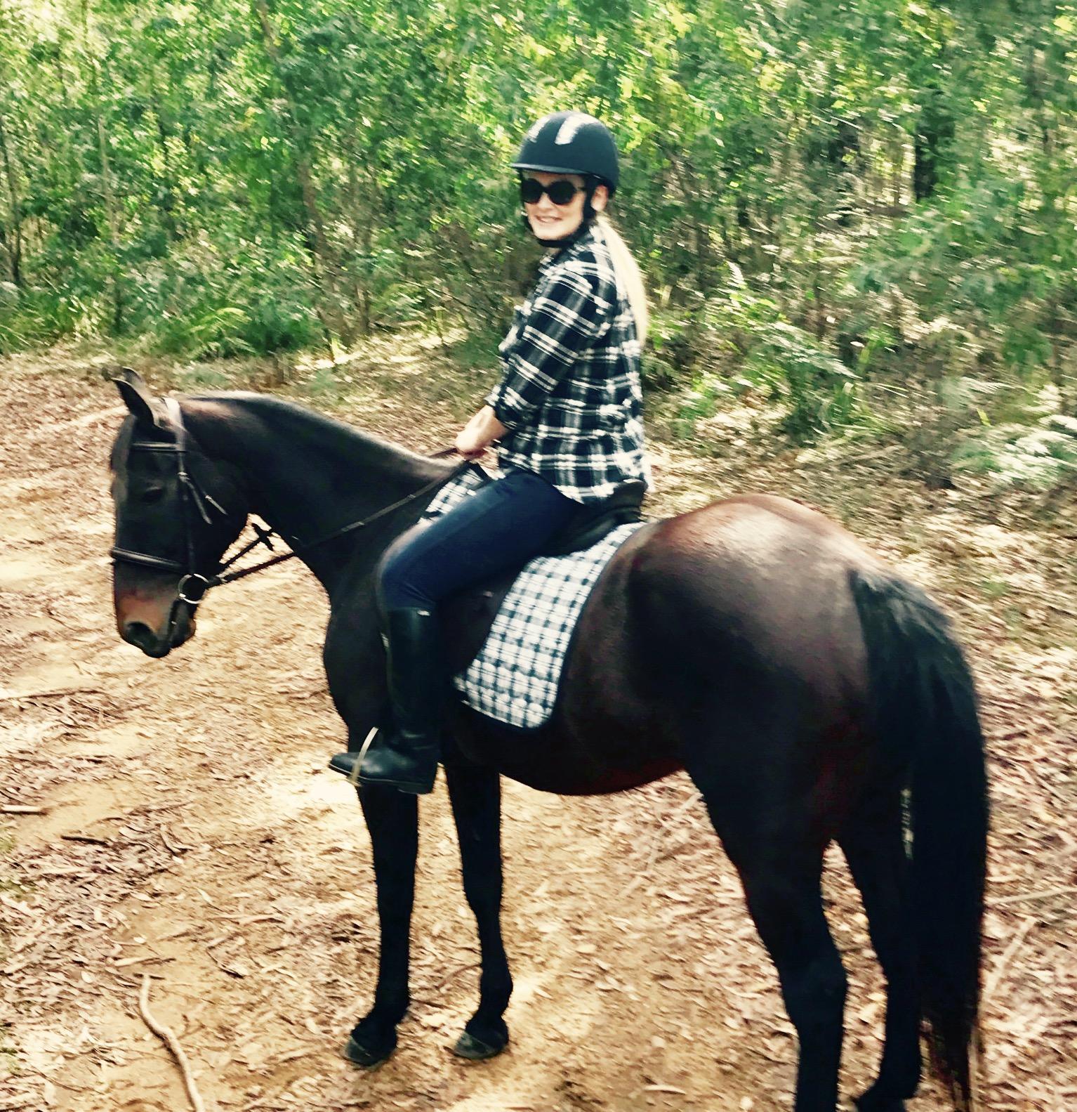 Quiet stock horse gelding