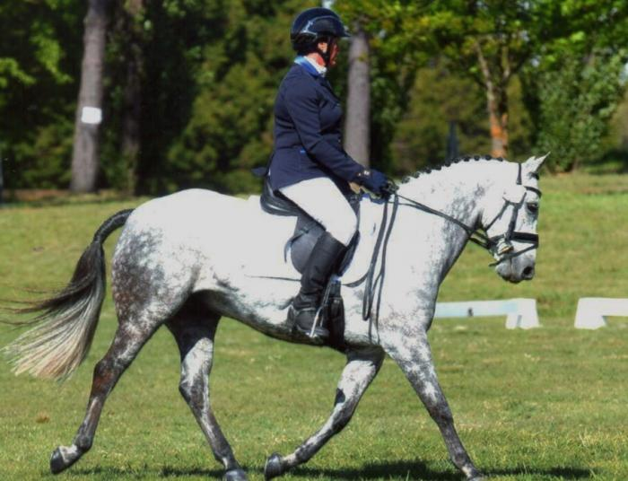 Dressage/Show Hunter /Alrounder